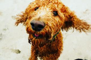 Cornwall's New Beach Rules for Dogs