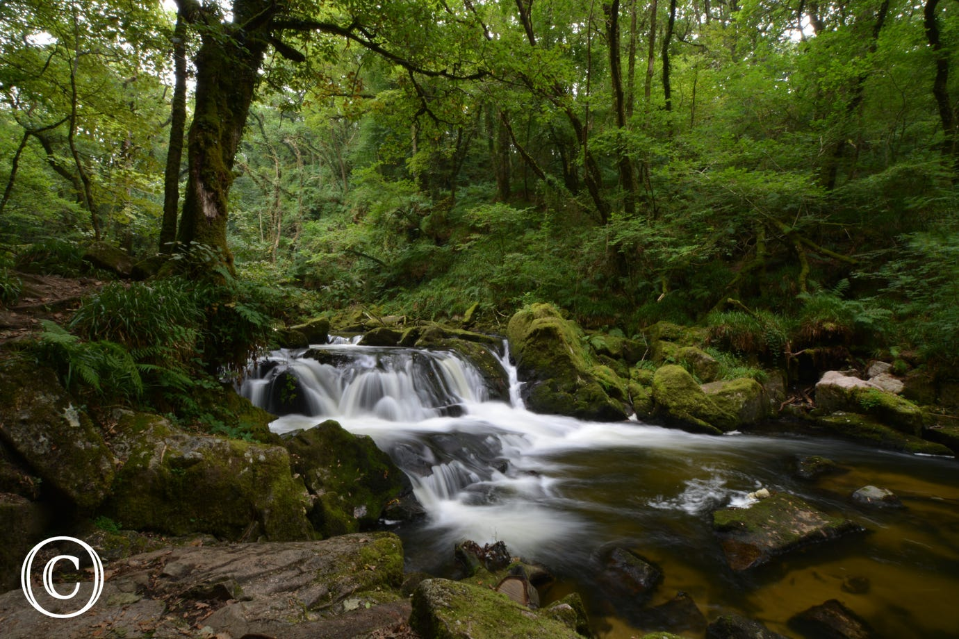 Only half an hour's drive to the spectacular Golitha Falls on Bodmin Moor