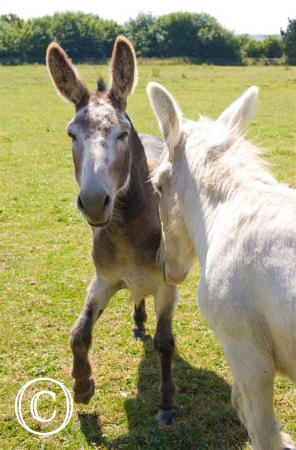 Owners donkeys in neighbouring field