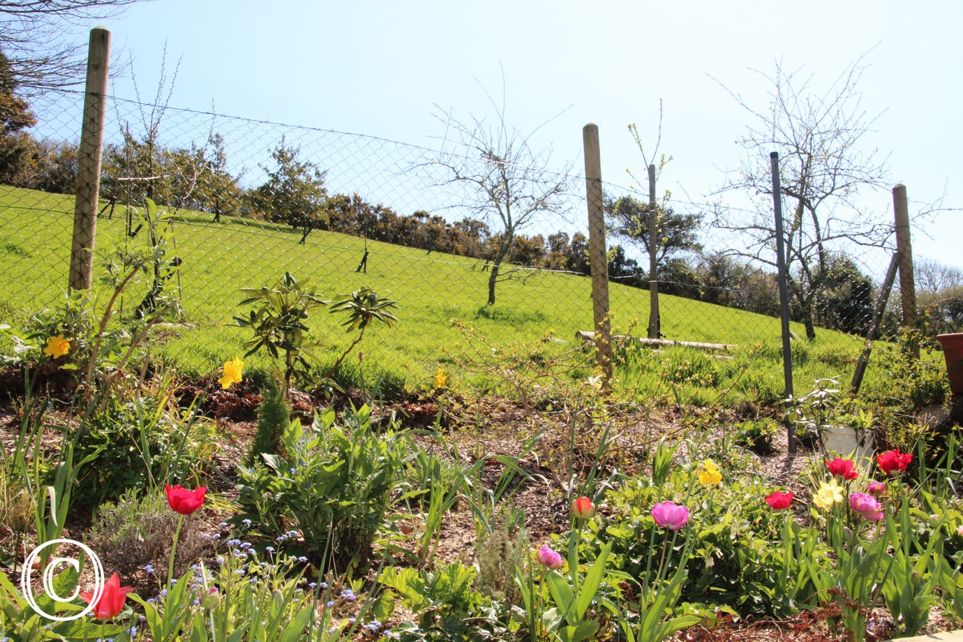 Spring garden overlooking the orchard
