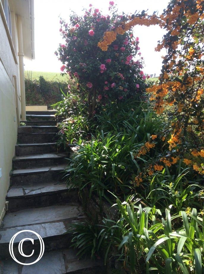 Steps to the cove suite
